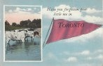 Toronto greetings postcard banner with cows