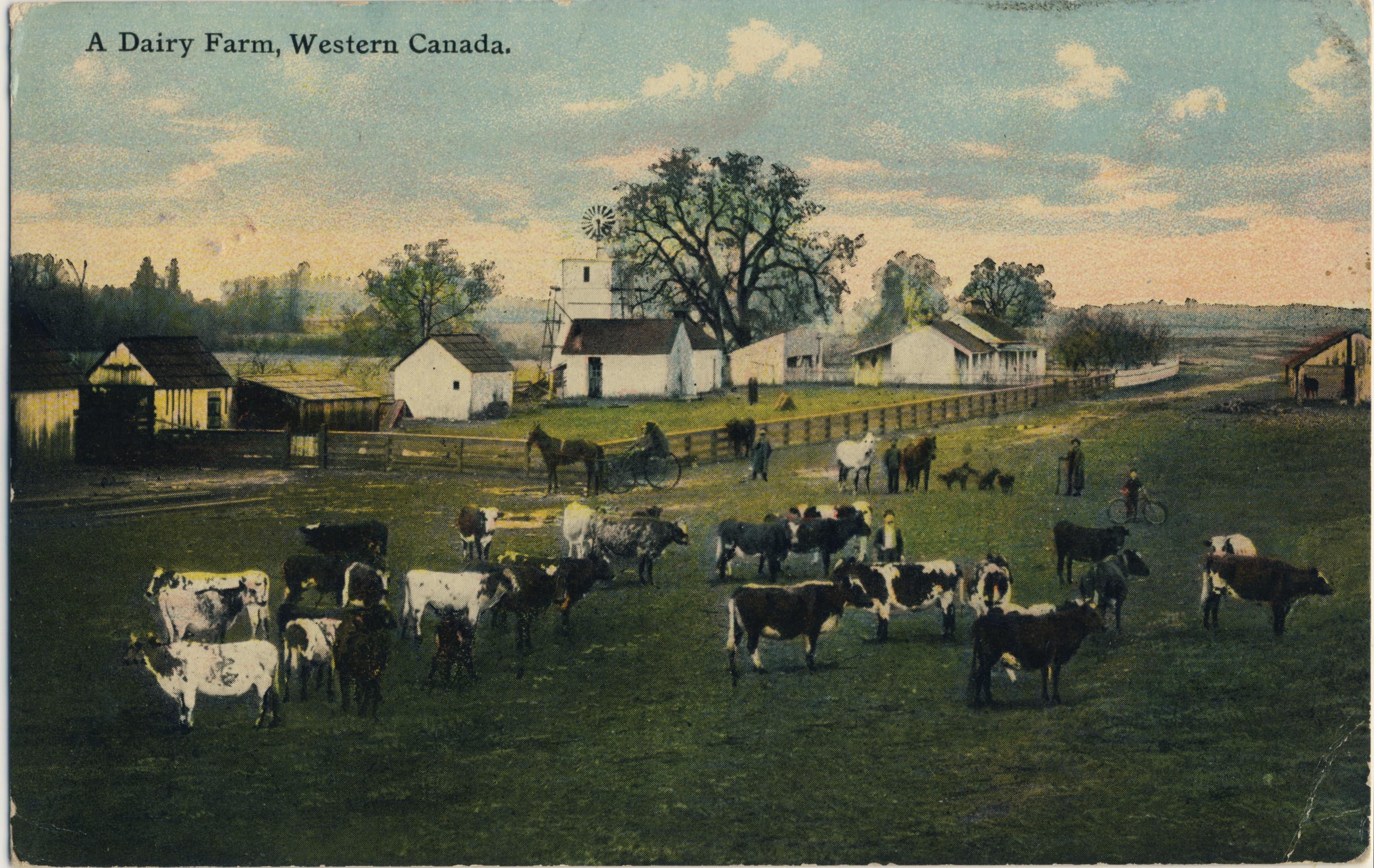 A Dairy Farm, Western Canada
